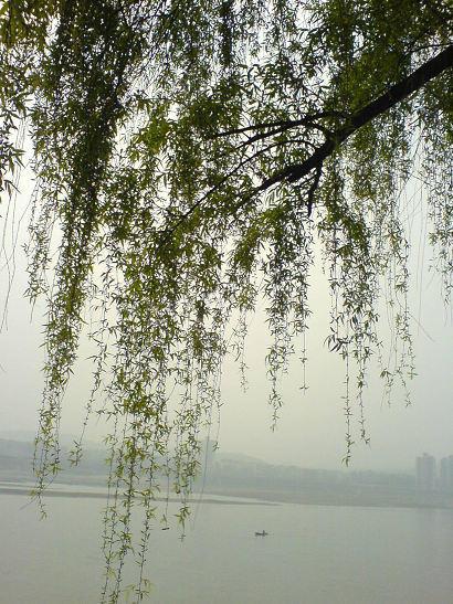春日临江柳